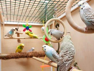 Попугайчики сидят в клетке