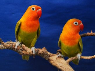 Разноцветные птицы