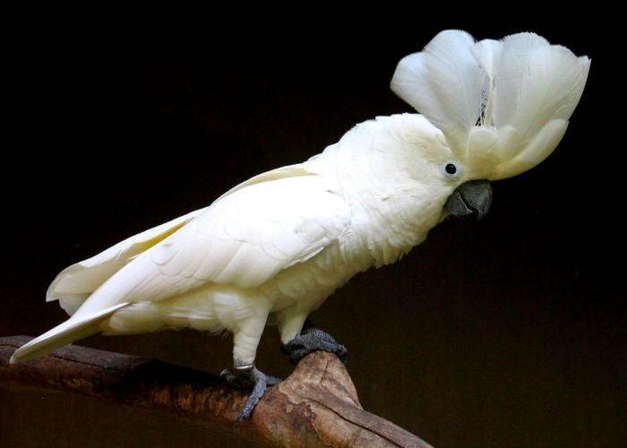 Попугай сидит на ветке