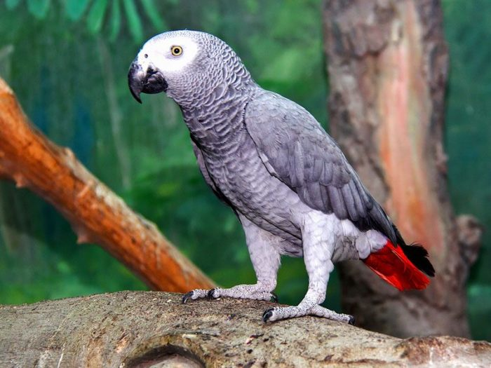 Попугай Жако сидит на дереве