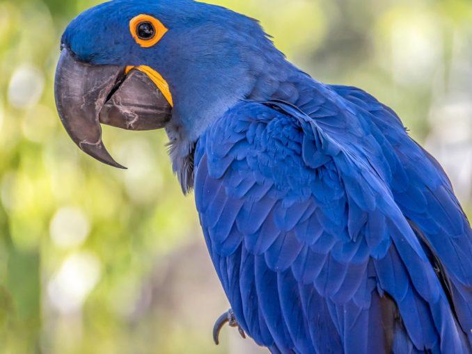 Самая красивая птица