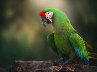 Попугай ара сидит на дереве