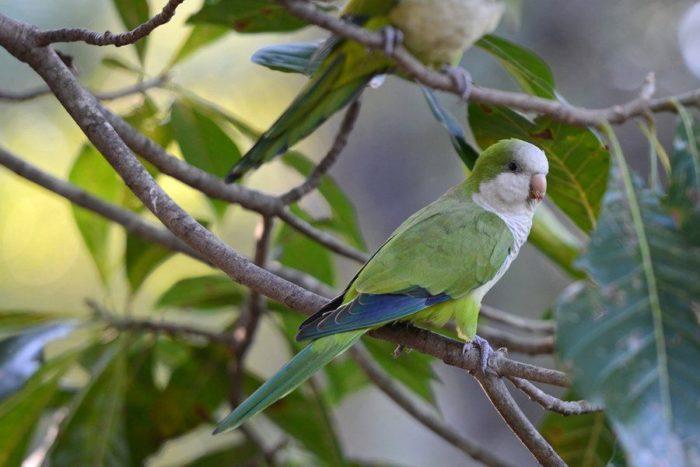 Попугай калита сидит на ветке