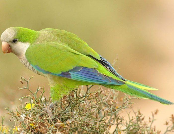 Самый разговорчивый попугай