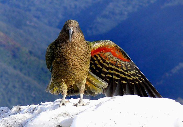 Попугай сидит в горах