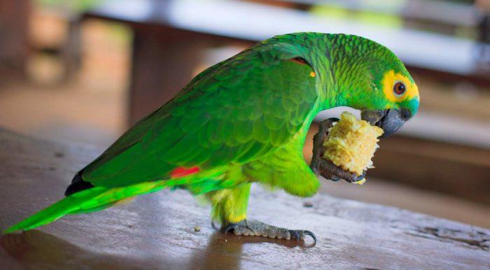 Питание амазонских попугаев