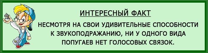 Интересный факт о какариках