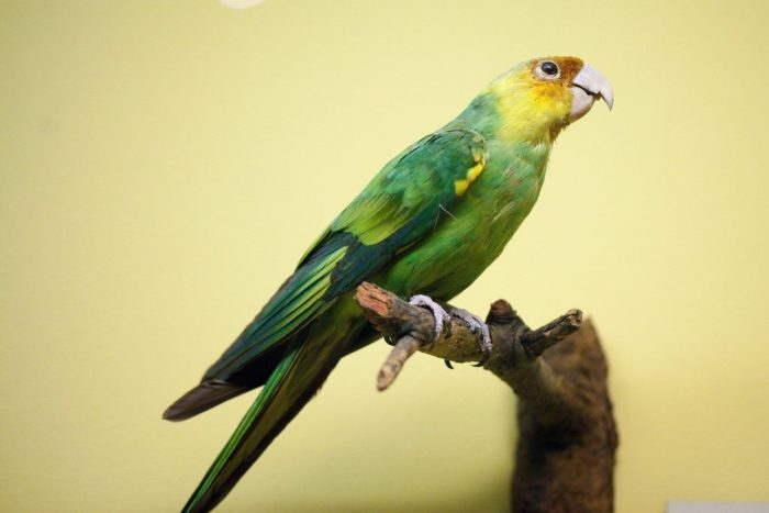 Птица которая исчезла с лица земли