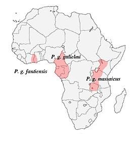 Где живут Конголезские попугаи