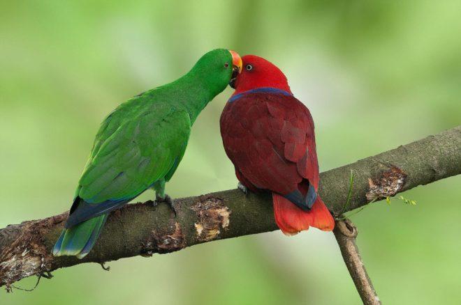 Благородные попугаи