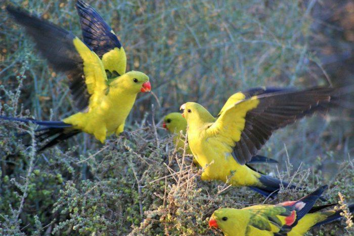 Попугай в дикой среде