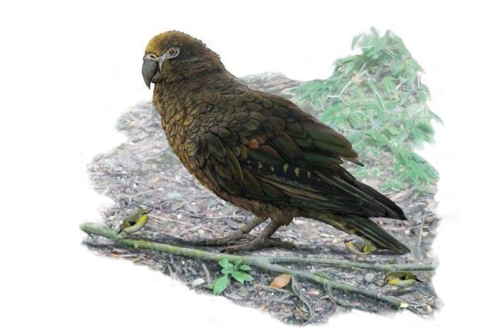 Самый большой попугай в мире