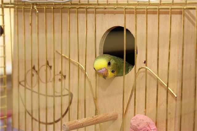 Птенец выходит из гнездового домика