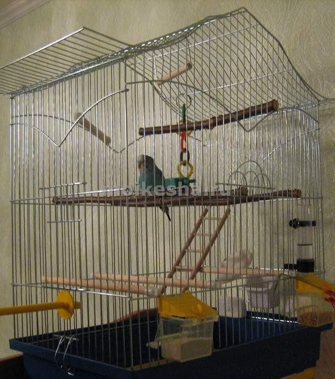 волнистые попугаи игры