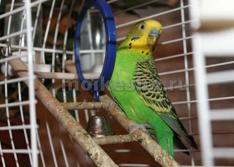 домик для попугаев волнистых