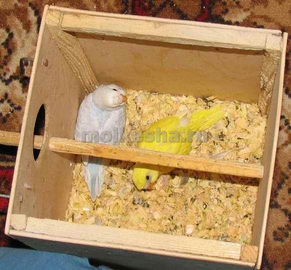 Домик попугаям своими руками