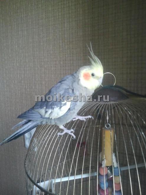 клетка для попугая корелла