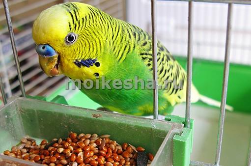 питание волнистых попугаев