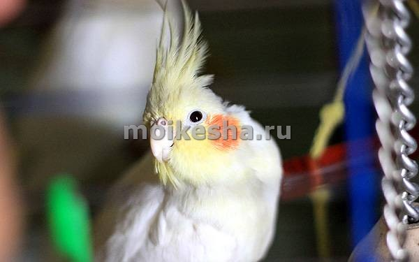 птиц самки
