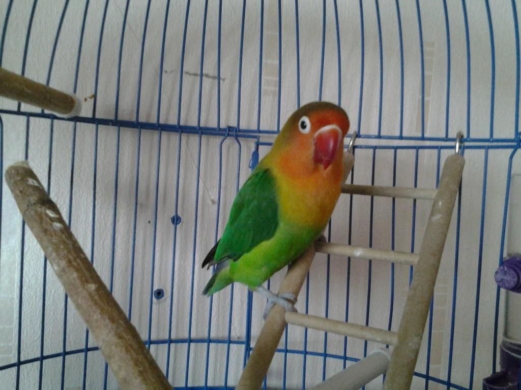 клетка для попугаев неразлучников