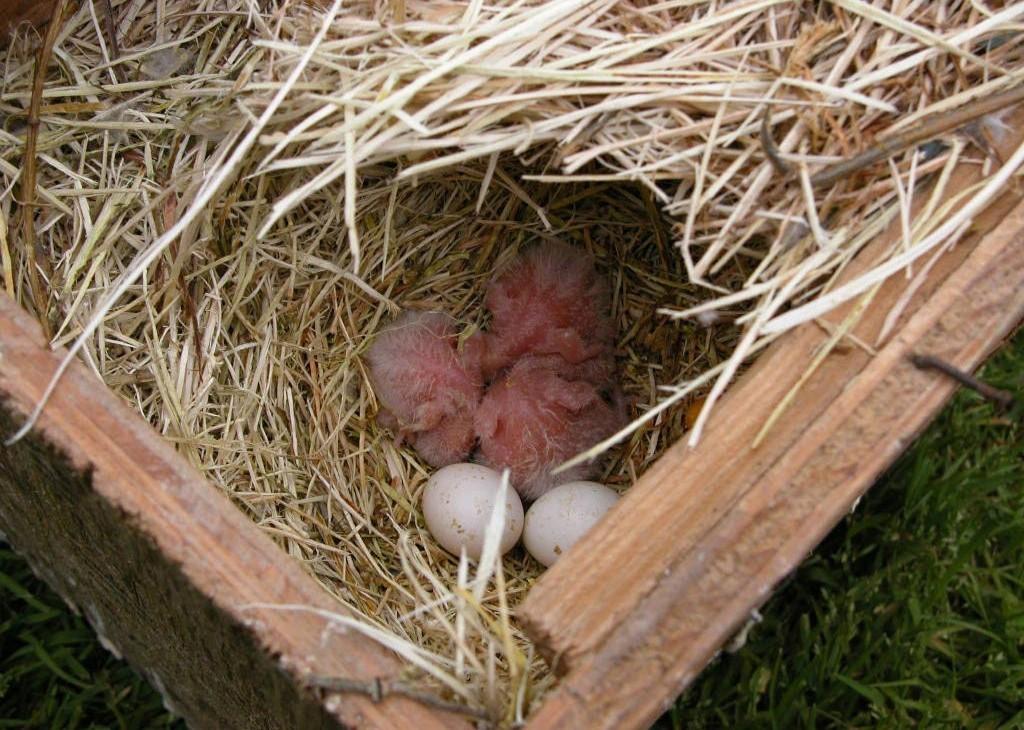 как сделать гнездо для неразлучников своими руками
