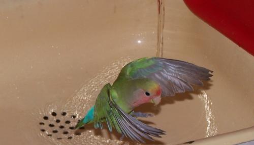 поилка попугайчик