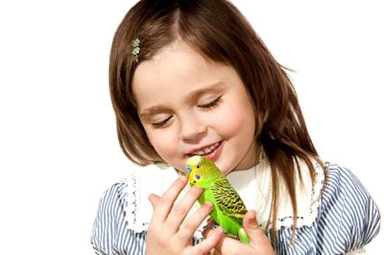 аллергия у волнистых попугаев симптомы