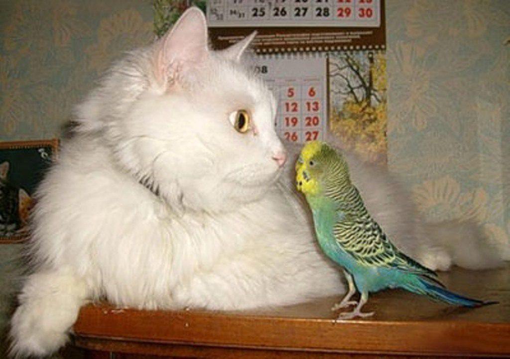 причины стресса у волнистого попугая