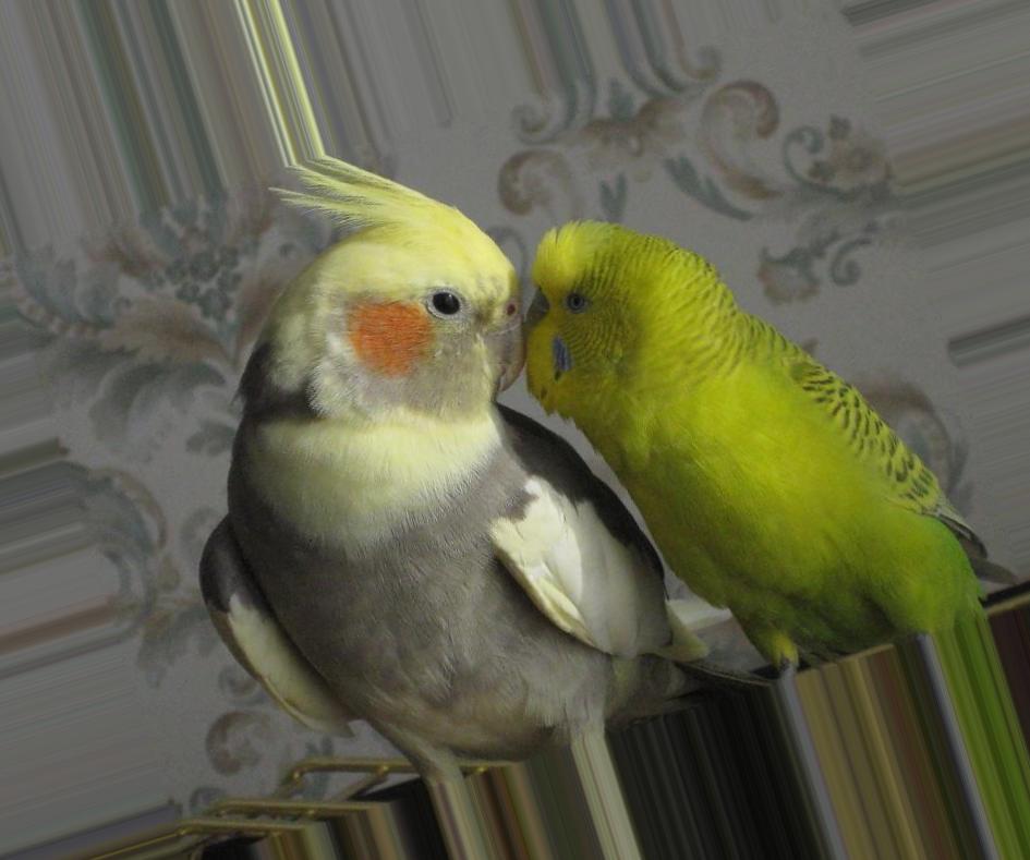 причины чиханья попугаев